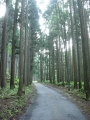 170610相変わらず見事な杉並木