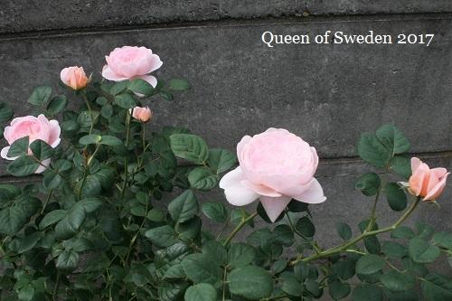 20170522クイーンオブスウェーデン