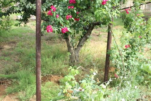 バラのフェンス