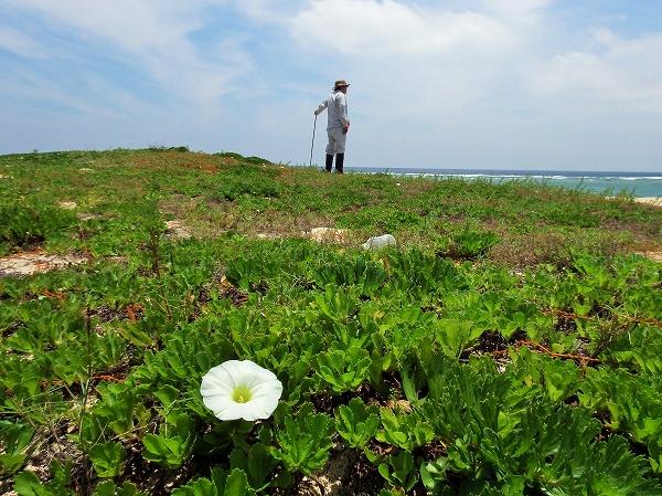 花とオジサンs-