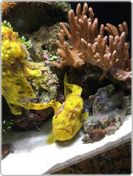 黄色の深海魚