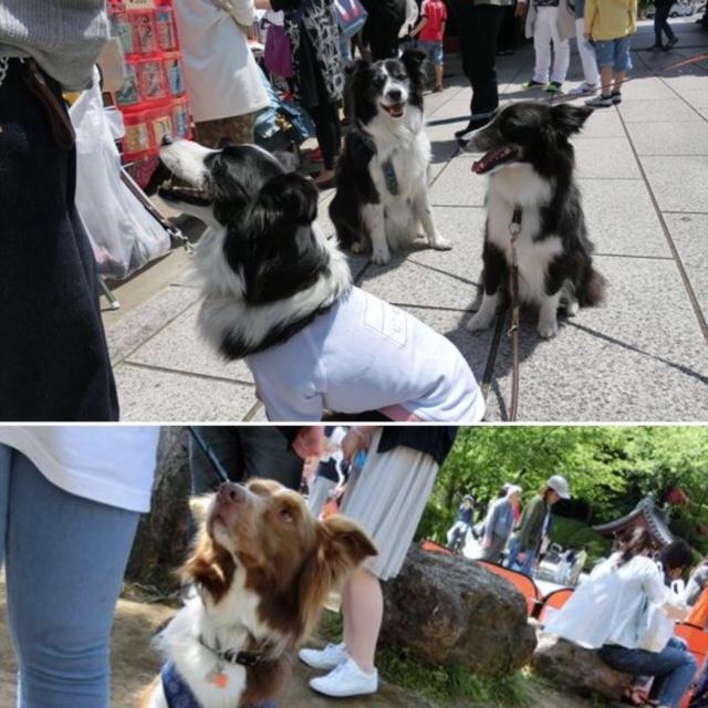 護国寺卒業犬