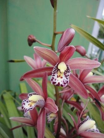 近所の花②