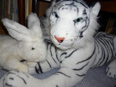 ホワイトタイガーと兎