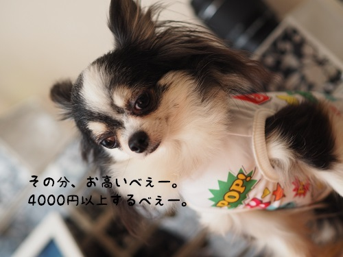 P6030018.jpg