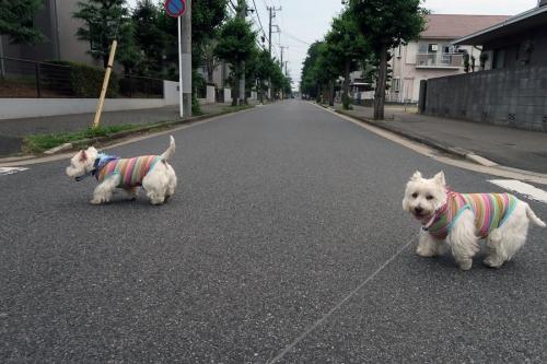 atuisimusimusikimochiwaruiyo1.jpg