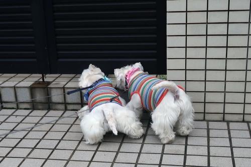 dourohamannakakarakawaku4.jpg