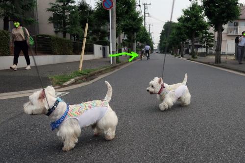 ichibanhosoiichigachigaunoda2.jpg