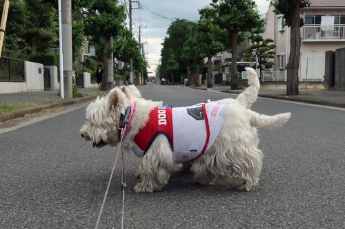 spareribshatuginohigatanosiiyo3.jpg