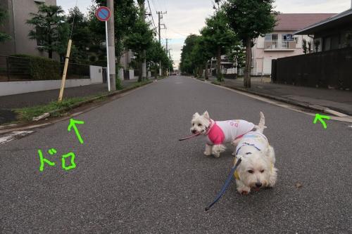 taifunokonsekihaharanootode3.jpg