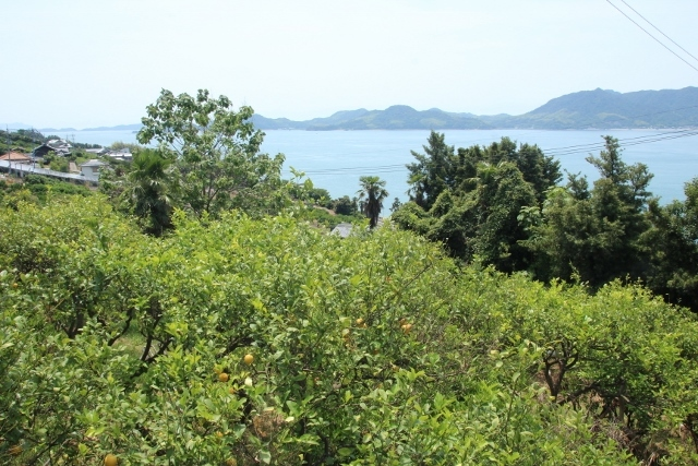 島ごころ (9)