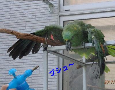7_水浴び2