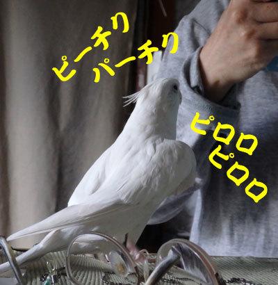 4_アンジュ2