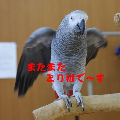 2_とり村