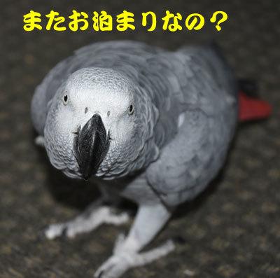 3_お泊まり
