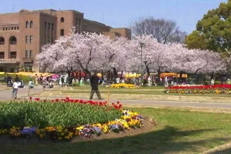 鶴舞公園の桜18