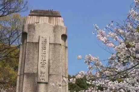 鶴舞公園の桜13