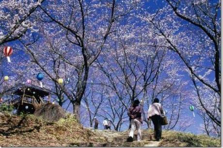 苗木城山公園