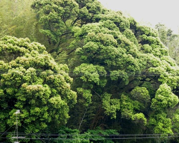 山笑う 2017 5 17 新緑 花 1 大窪神社 0387
