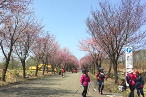 2017世界一桜並木 (39)_300
