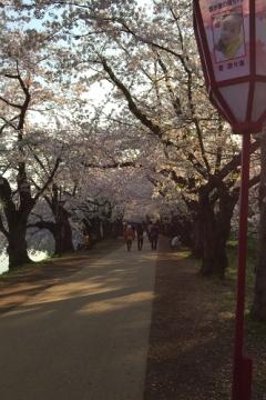 弘前公園4-30 (2)_500