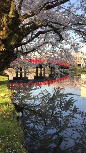 弘前公園4-30 (3)_500