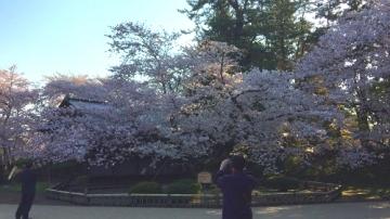 弘前公園4-30 (4)_500