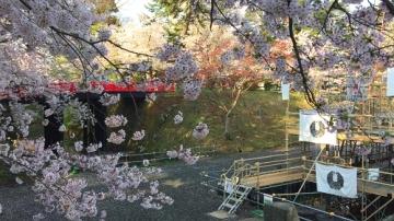弘前公園4-30 (7)_500