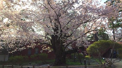 弘前公園4-30 (8)_500