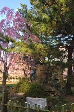 弘前公園4-30 (9)_500