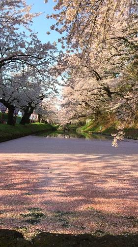 弘前公園4-30 (10)_500