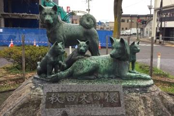 秋田犬大館 (2)_500