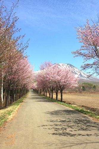 嶽歩き (21)_500