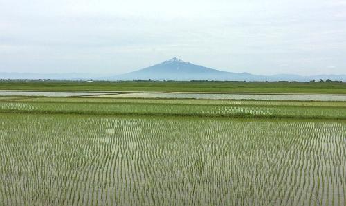 水田と岩木山1 (1)_500