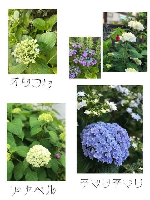 IMG_7485.jpg