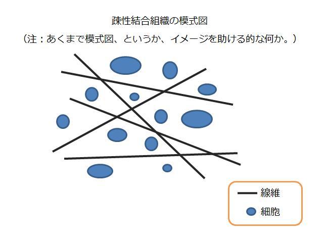 結合組織の構造