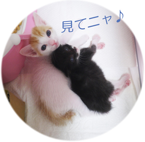 見てニャ-Blog用