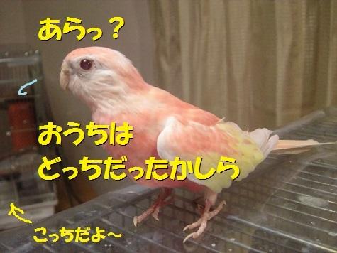 CIMG8354.jpg