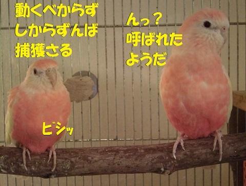 CIMG8375.jpg