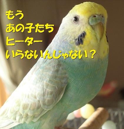 CIMG8436.jpg
