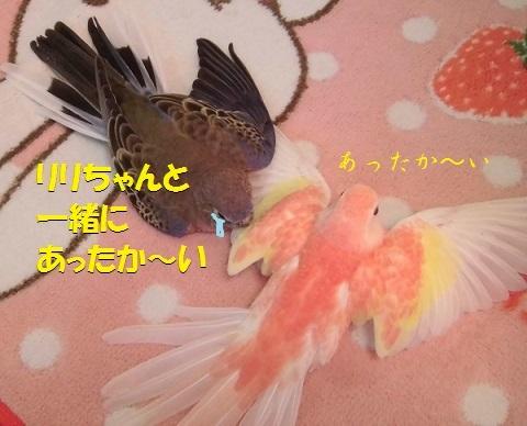 CIMG8459.jpg