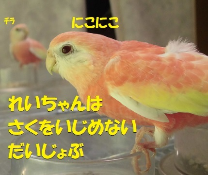 CIMG8680.jpg