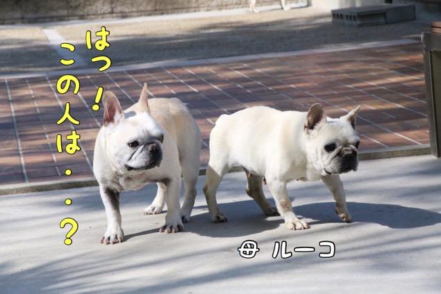 どんかの フレブル 6