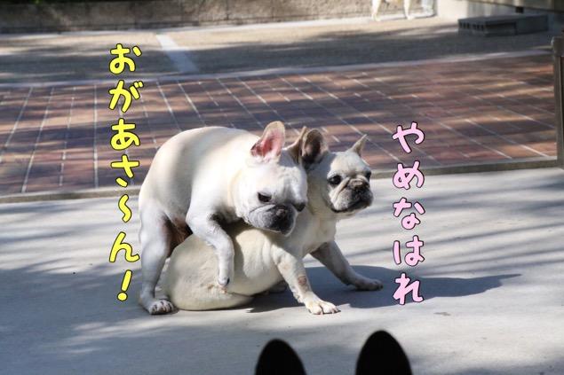どんかの フレブル 7