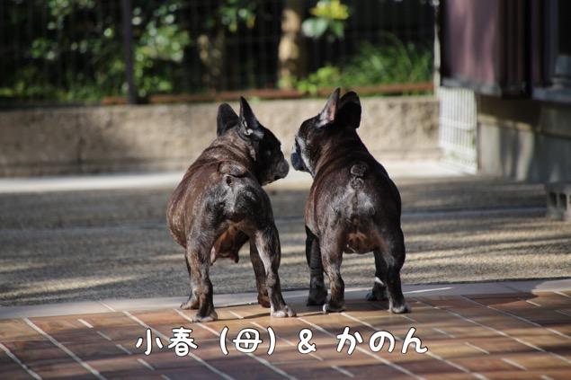 どんかの フレブル 8