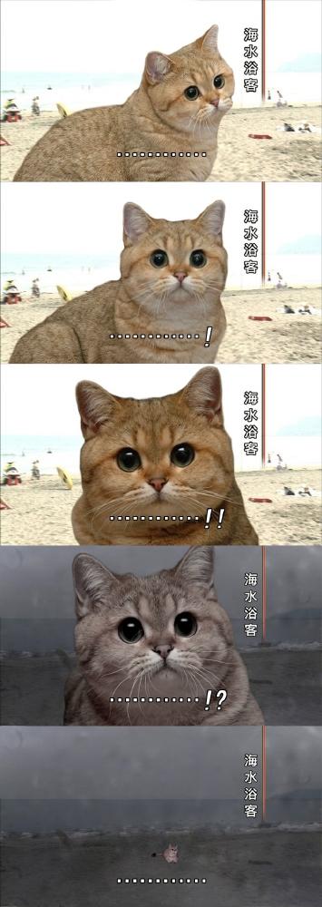 猫の身に何が…あまり動じない