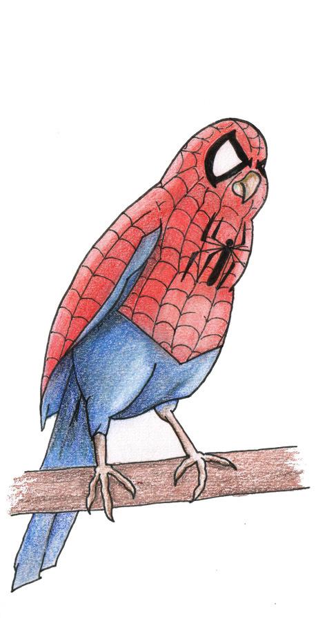 スパイダー鳥