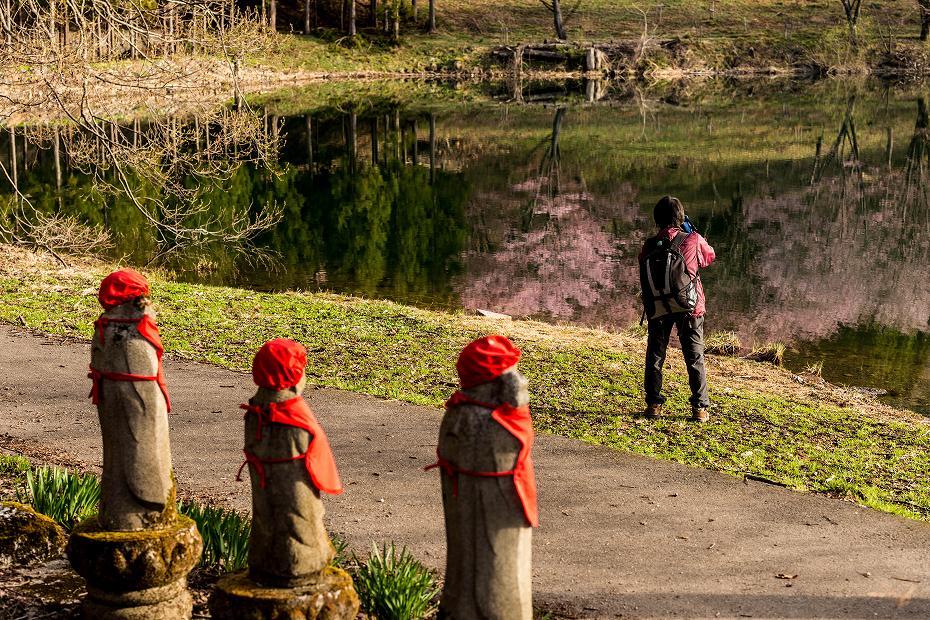 2017.05.03中綱湖のオオヤマザクラ11