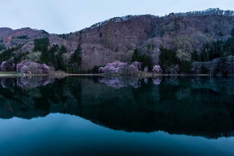 2017.05.03中綱湖のオオヤマザクラ1