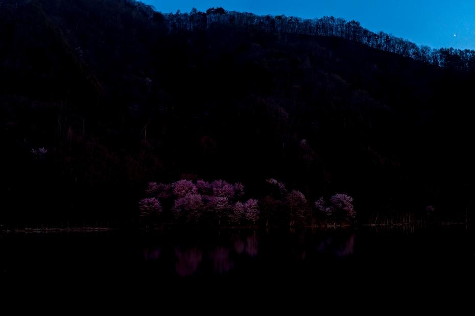 2017.05.04中綱湖のオオヤマザクラ2
